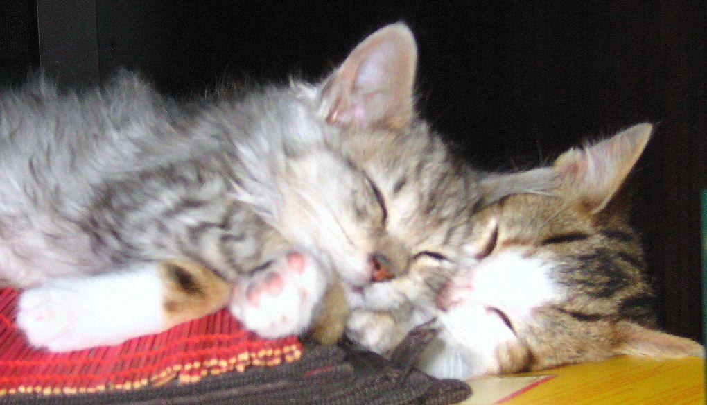 photos de chats d'octobre 2010