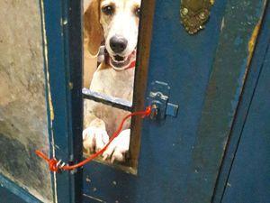 URGENT : cherchons famille d'accueil ou adoptant  : NIKA - née fin 2013 - petite chienne stérilisée -
