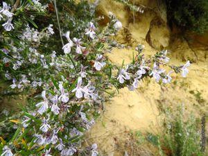 Quelques fleurs de fin d'hiver