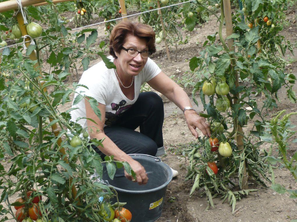 Le potager bio du Mas Chansonnet, ses légumes et ses fruits qui nous ont titillé les papilles.