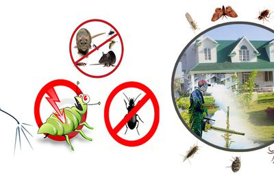 Where to Find a Pest Control Service