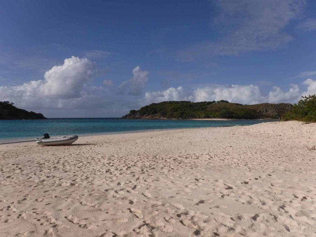 B-line Beach Bar - Sandy Cay