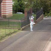 Insolite photo du lapin de Pâques qui vous salue - Doc de Haguenau