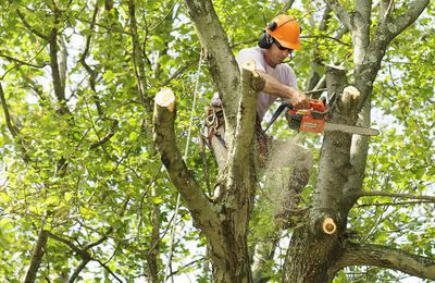 Need Tree Services in Sarasota County? Consider These 5 Factors!