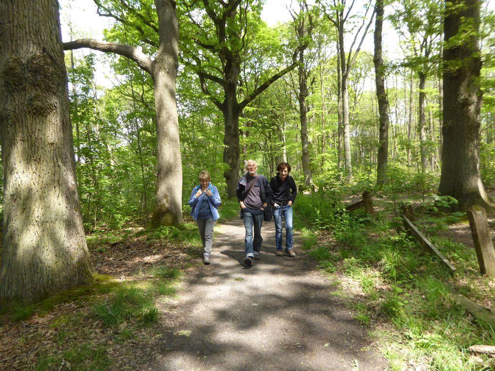 Randonnée de Versailles-Chantiers à Igny - 21 km.