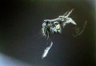 myu black cat