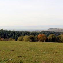 Balade dans les bois de Saint-Médard-en-Forez (42330, Loire)