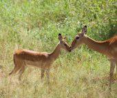 Organisez votre Safari court en lodges avec extension possible à Zanzibar : Arusha, Manyara, Cratère du Ngorongoro, Arusha