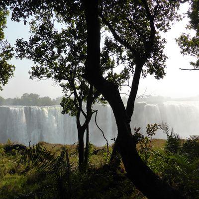 Zimbabwe-Botswana-Le Cap novembre 2017