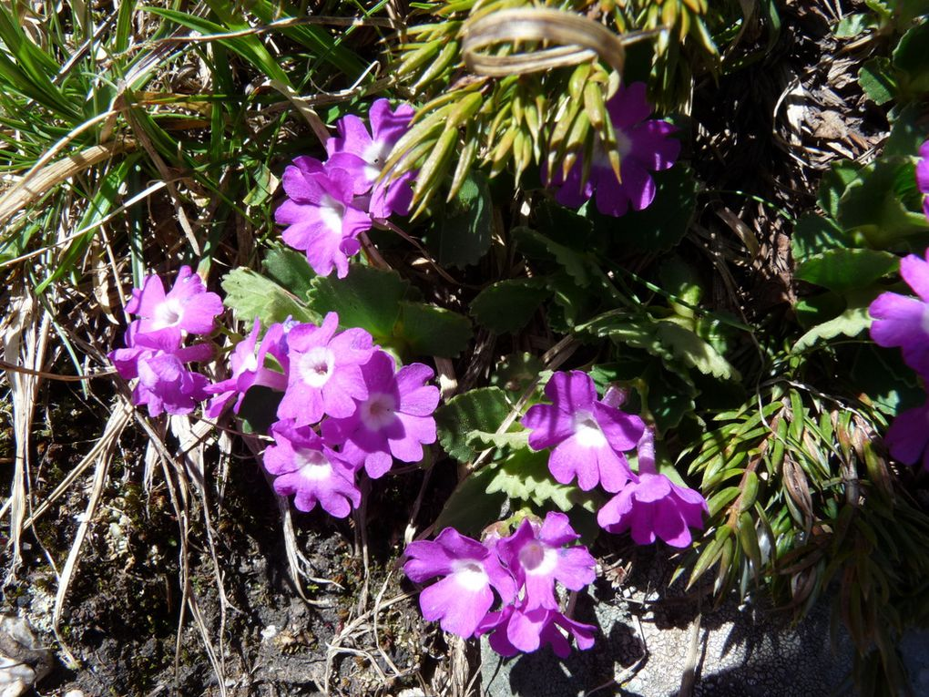 Fleurs 150