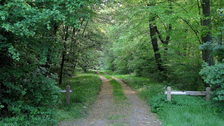 carrefour_Route du Moulin_Route du Guet du Nid