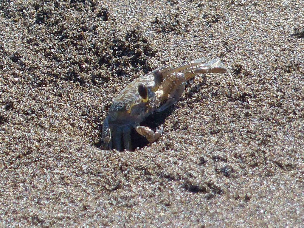 La Malinche - El Tajin - Playa Esmeralda