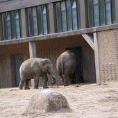 Besuch Zoo Berlin 29.08.20