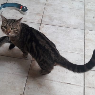 A adopter : BOBI, petit mâle castré de 2 ans