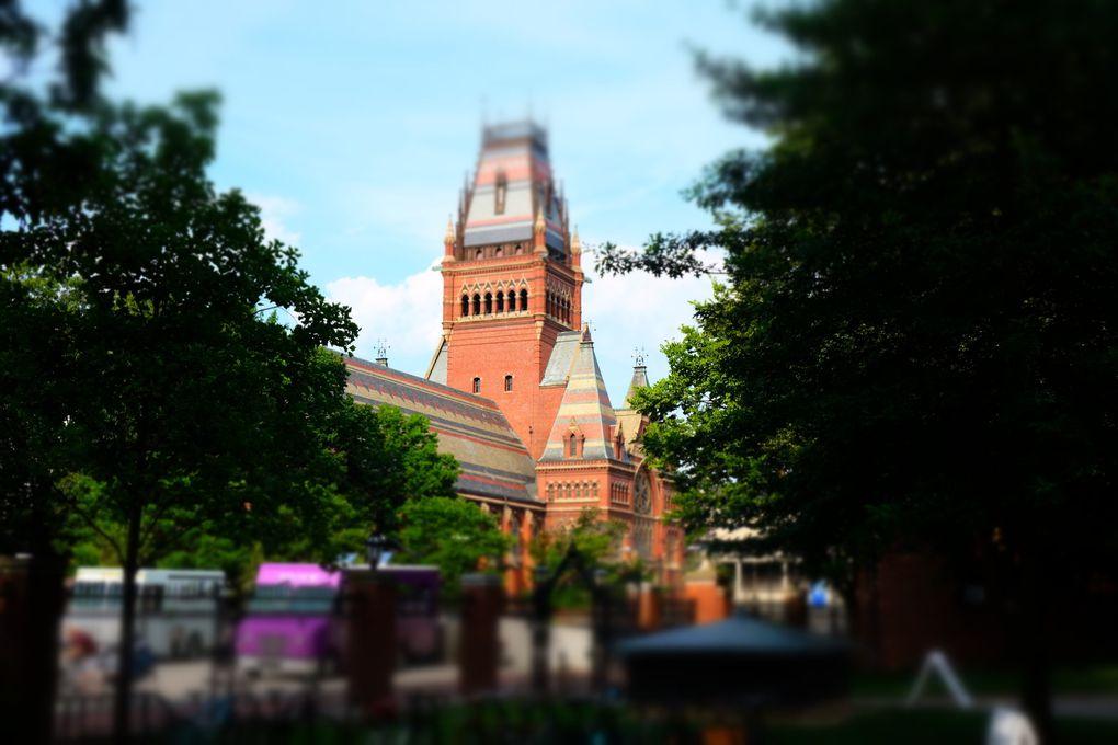 C'est (une fois encore) la première université américaine selon le classement de Shangaï. Avec pas moins de 46 prix Pulitzer, 44 Prix Nobel, 8 Présidents des Etats -Unis, des acteurs (Matt damon et Natalie Portman notamment), des personnalités politiques (Al Gore et Jacques Chirac), l'université de Harvard accueille depuis sa naissance en 1636, l'élite intellectuelle dans ses 10 facultés et a fait l'objet de dizaines d'études tant l'institution est importante et une référence aux Etats-Unis.