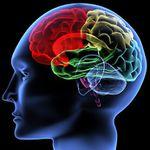La complexité et le caractère multifactoriel du vieillissement cérébral : Une nouvelle étude en atteste !