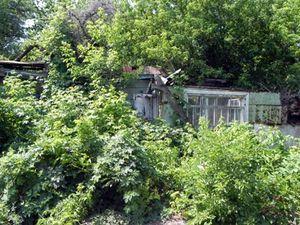http://www.notre-planete.info/actualites/actu_3283_cutures_Tchernobyl.php - Sur le diaporama dans lequel se trouve cette 2e photo, découvrez de nombreuses autres photos, troublantes... http://www.20minutes.fr/monde/diaporama-1541-photo-664399-pripyat-ville-fantome-apres-tchernobyl