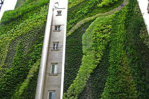 La nature en ville : quelles bestioles dans les murs végétaux ?