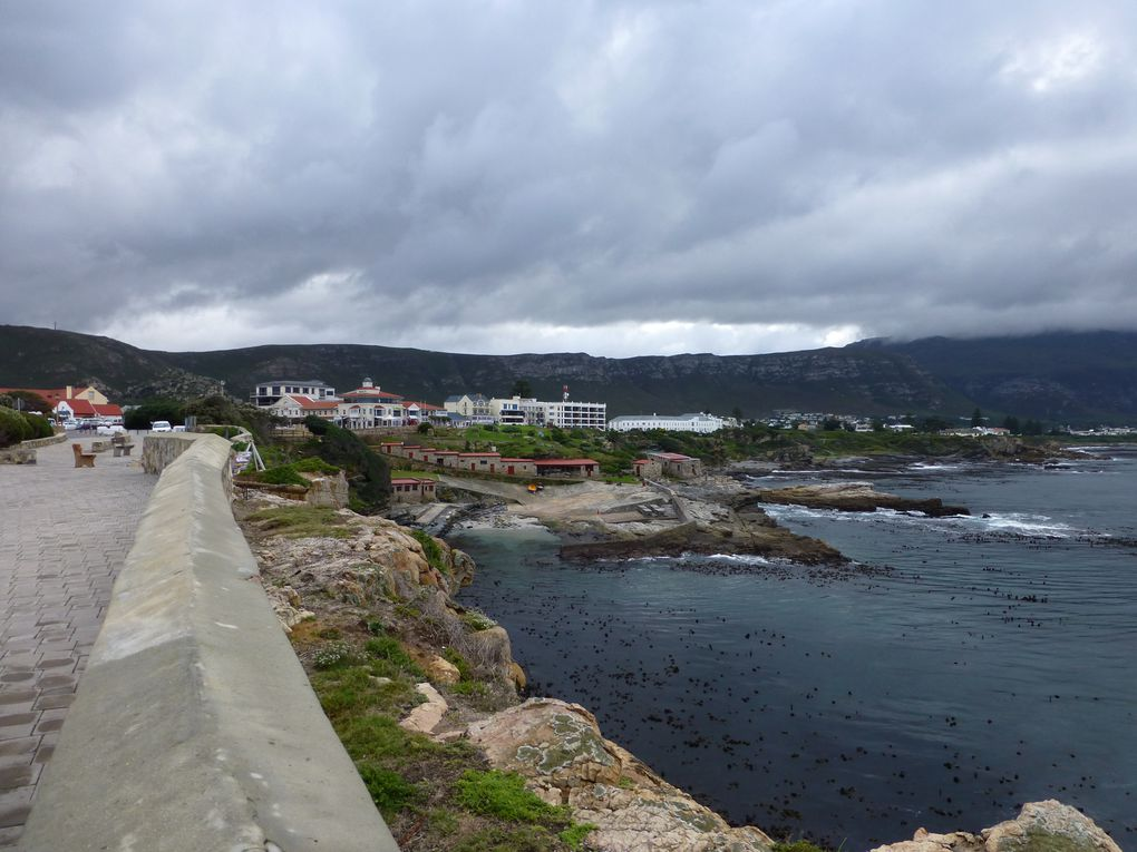 Album - 111---HERMANUS