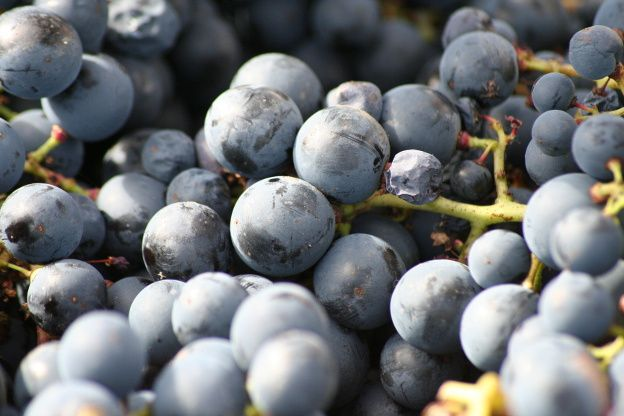 Album - vendanges 2010