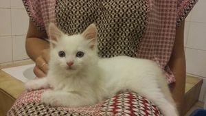 Minty, chaton mâle à poils mi longs, à l'adoption -> adopté