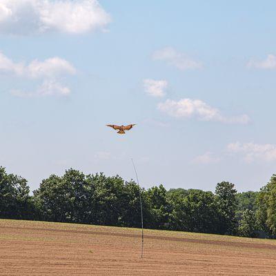Des cerfs-volants pour protéger les cultures.