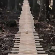 Bach au xylophone, poésie en forêt…