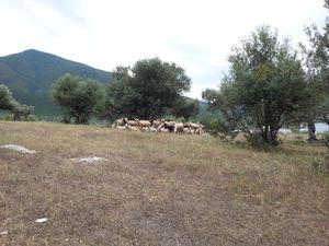 De Chalkis à Volos
