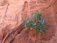 La végétation ayant pris l'habitude de pousser dans ce milieu aride, même la roche se plait par mimétisme à rendre hommage à la bravoure de ses belles du désert