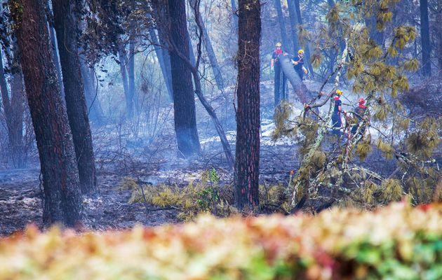 Incendie à Anglet :: Cent hectares de la forêt d'Anglet partent en fumée / Aquitaine Infos