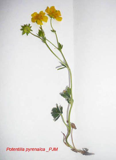 plantes du plateau de beille.Par type de milieu.cette flore sera complétée au fur et à mesure des randonnées.