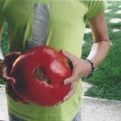 Tomates géantes- Record à Battre! - Jardins Volpette