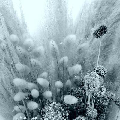 Fleurs de dunes