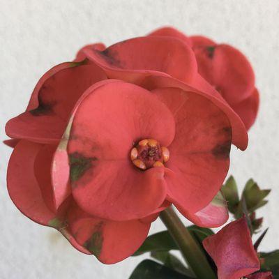 Explosion de fleurs/Saint Côme