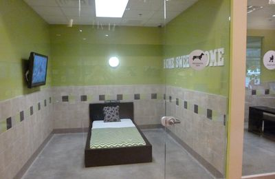 Dog in USA 2  : Pooch Hotel .....pour Chien