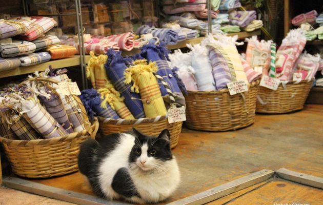 Le culte du chat à Istanbul