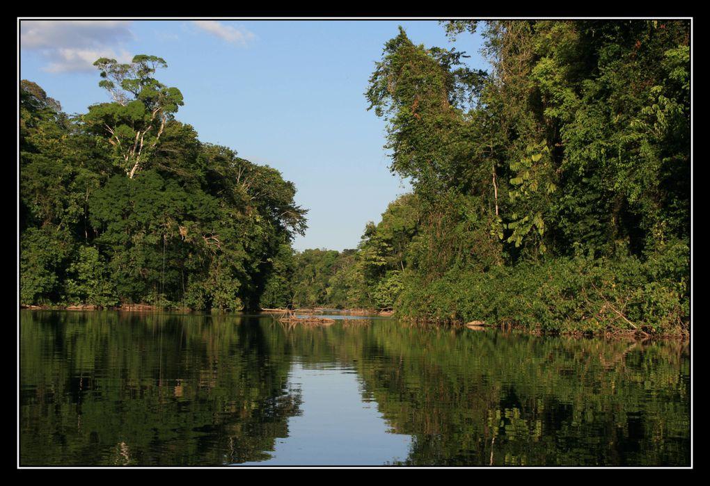 Album - Guyane2