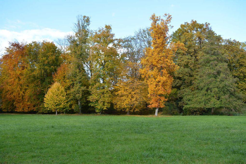 Les couleurs d'automne dans le parc du château...