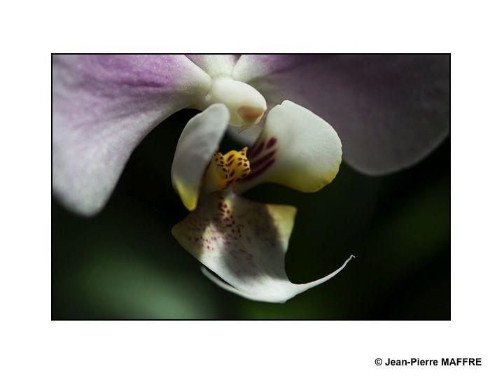 Des orchidées dans toute leur splendeur nous ravissent parla variété de leurs formes et de leurs couleurs.