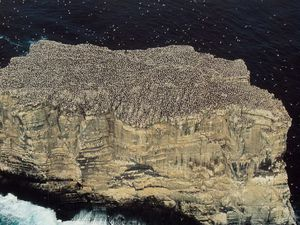 Location of Eldey volcano - the Rock of Eldey and gannets / Photo gaia.merveille.free.fr - a clic to enlarge