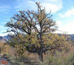 Les arbres de la Vallée...