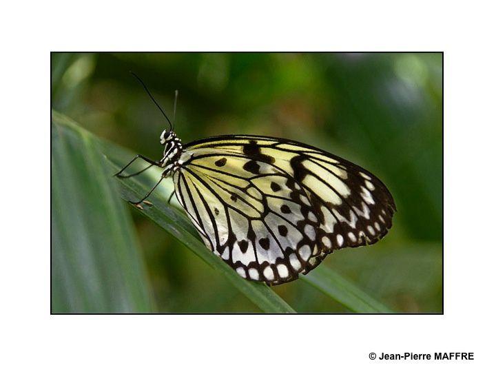 Quelques papillons exotiques dans leurs couleurs diverses et éclatantes.