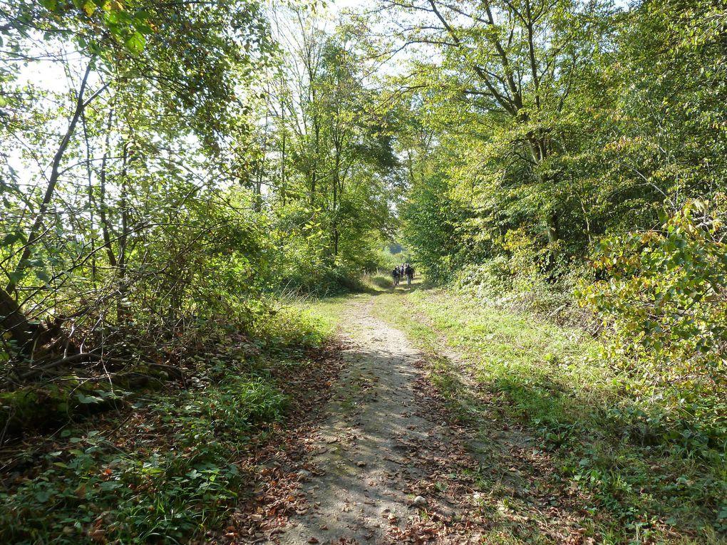 Nous terminons par la Route de la belle Laie (PR) dans la forêt domaniale de Montceaux et le GR11 ...