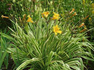 photo: monrovia.com et jardinsmichelcorbeil.com