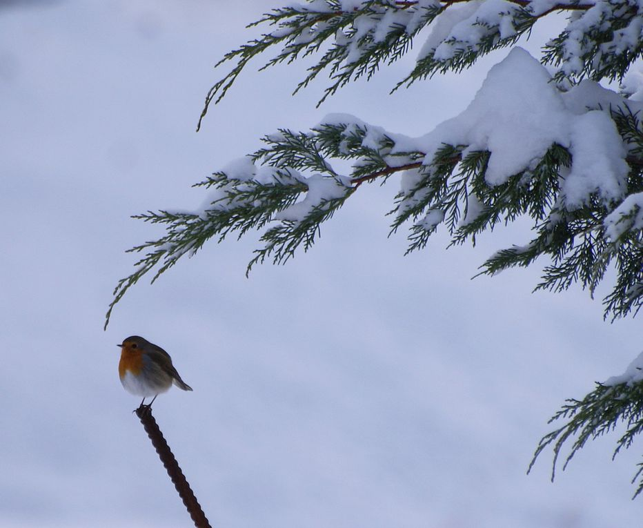 Album - oiseaux-2