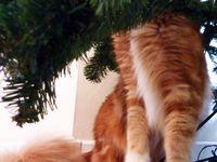 L'arbre (à chat) de Noël