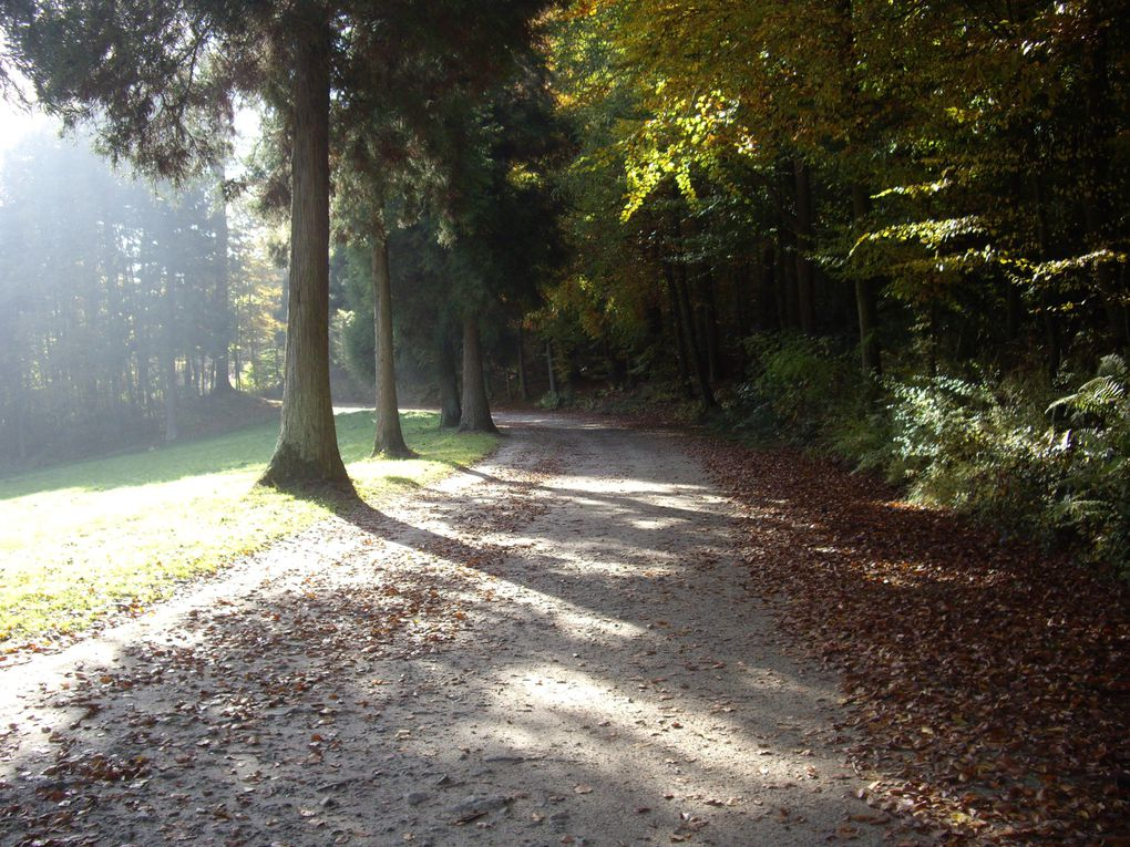 Album - Automne-en-Foret---Fondation-Follon