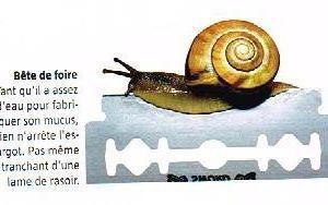 """""""Escargot""""(Rien ne sert de courir, il faut partir à point)"""
