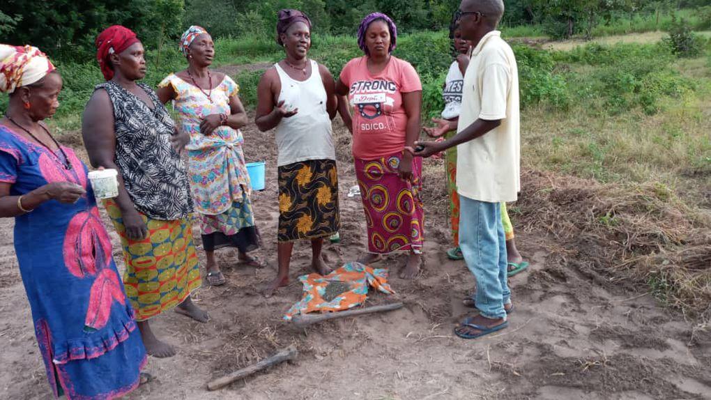 Session de formation, rappel des principes de repiquage avant de passer à la pratique, plants de citronniers dans des gaines, repiquage de plants appelés Kodia.