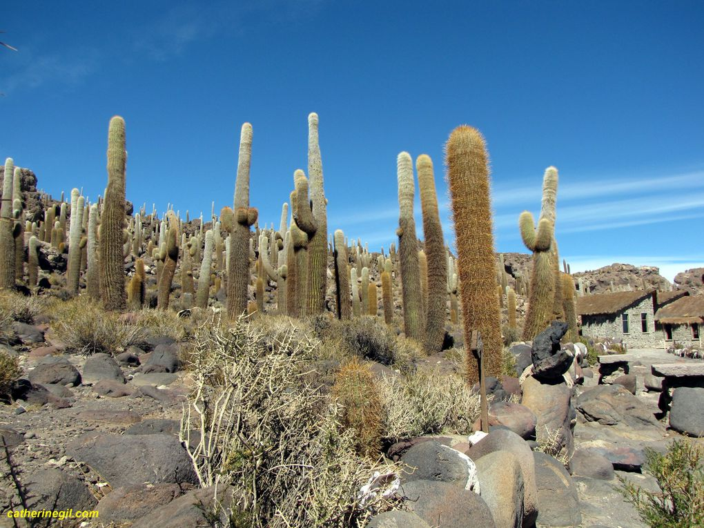 Album - Bolivie-Salar-de-Uyuni